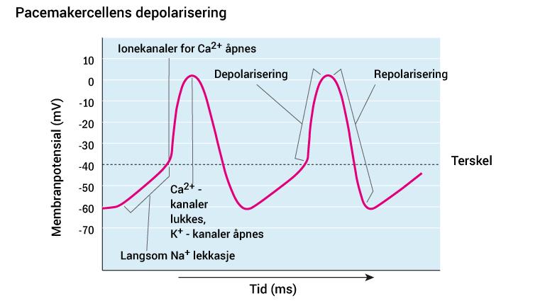 10_pacemakercellens-depolarisering_2016_norsk